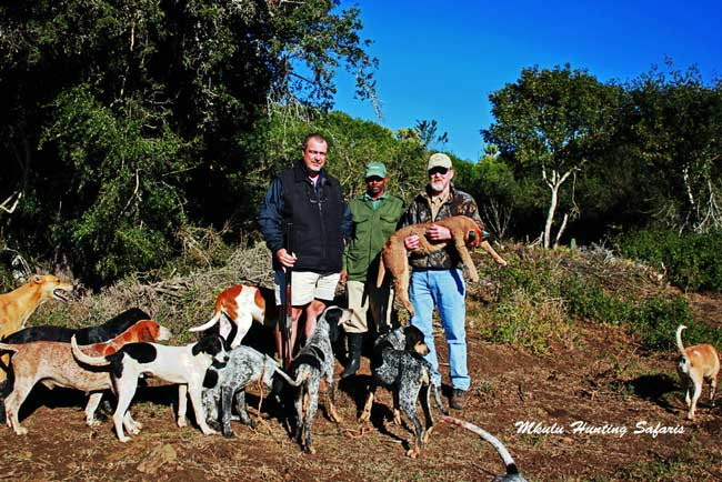 Hunting caracal with dogs South Africa