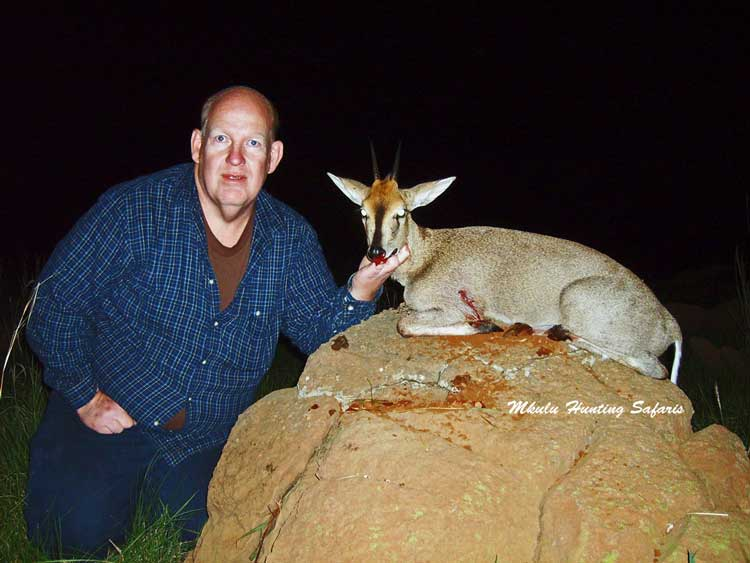 Hunting common duiker South Africa