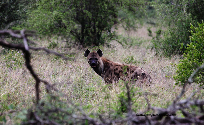 Hunting hyenas in Africa prices