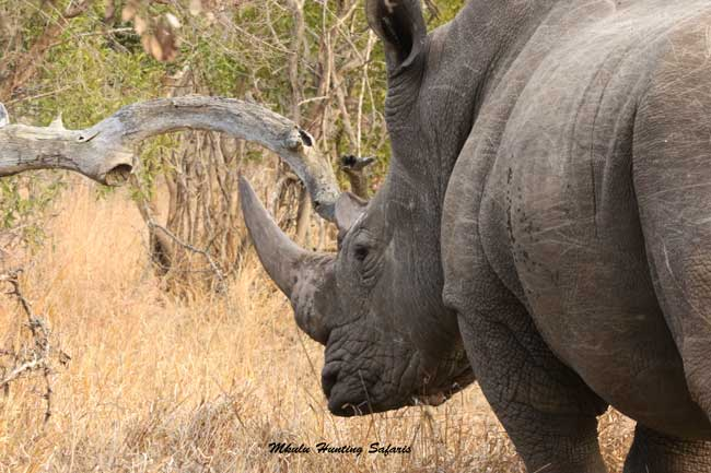 Hunting white rhino South Africa ammunition