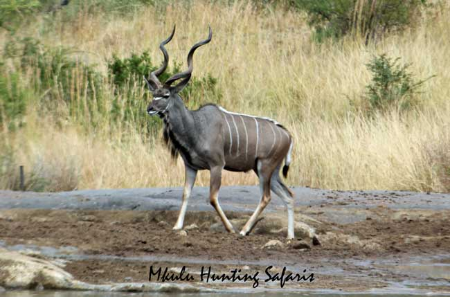 Kudu bow hunting prices